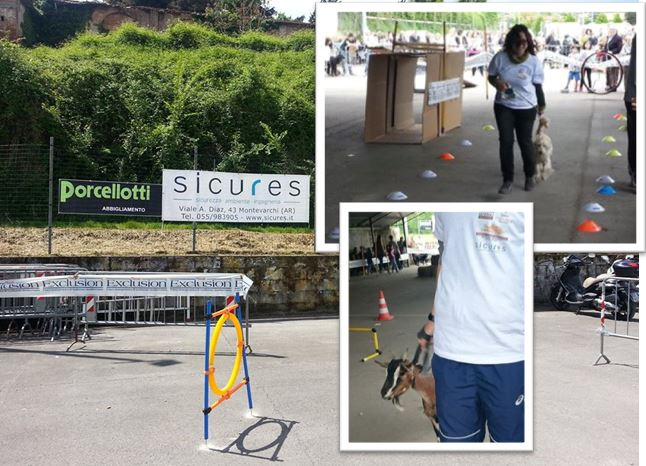 Sicures all'agility dog a 6 zampe